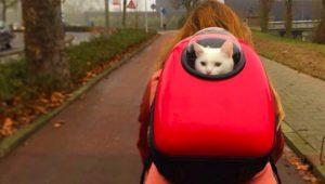 Miglior zaino porta gatto